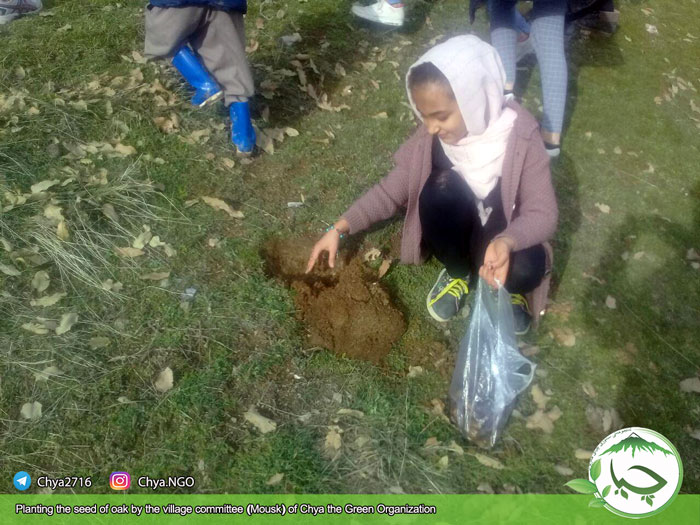 Planting the seed of oak by the village committee (Mousk) of
