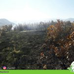 Forest fire – Kuray Musawi