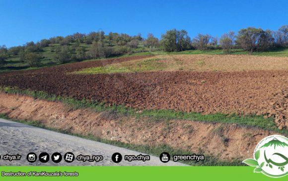 Destruction of KaniKouzala's forests