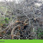 Destruction of GoyzhaZard's forests