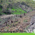 Destruction of Ne's forests