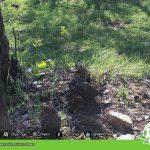Destruction of Kikn's forests